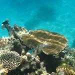 6. Great Barrier Reef, Austrálie.