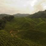 8. Malajsie.